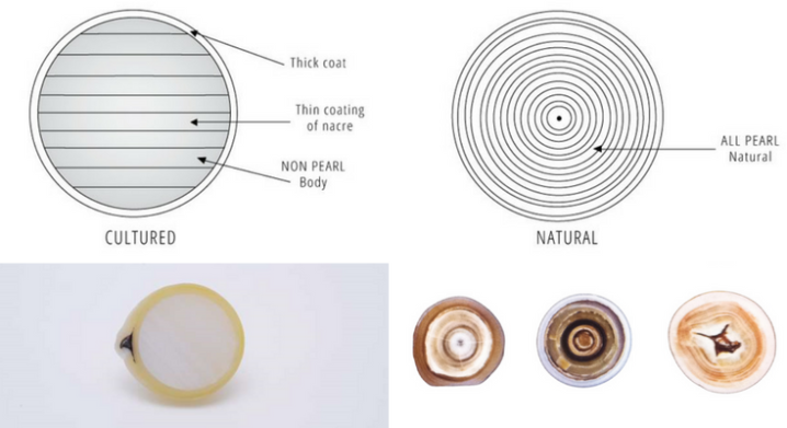 Natural vs Cultured Pearls in Cross Sections